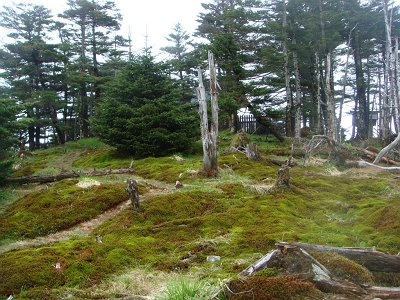 弥山の裏側の踏み跡