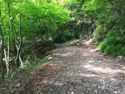 相変わらずの長い林道