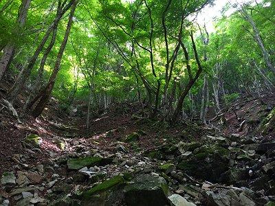 谷を二つはさんで左の尾根にいきそうだが、ここはとりあず中心を登っていく