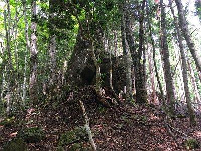 この大きい岩や木があるところから結構登りがきつくなる