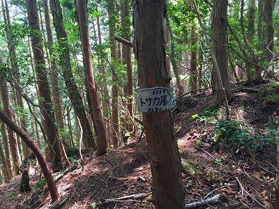 トサカ尾山(1119m)か!